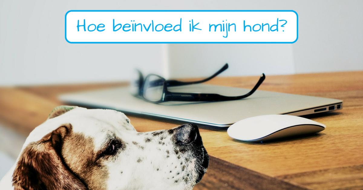 Op een positieve manier jouw hond beïnvloeden