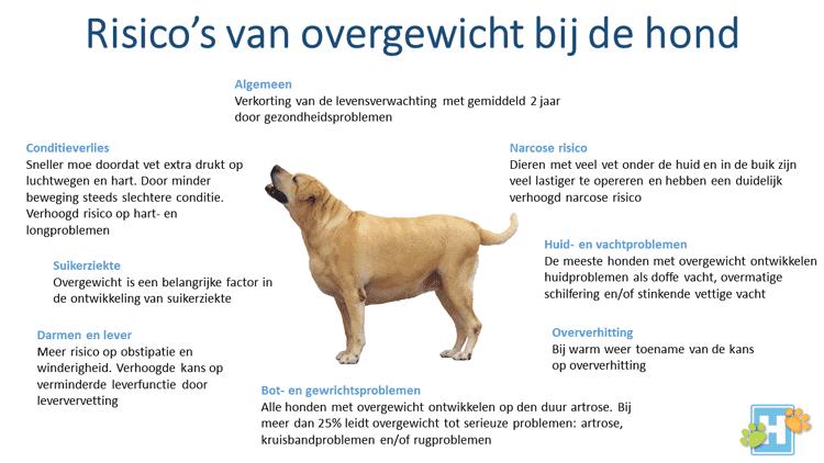 overgewicht hond
