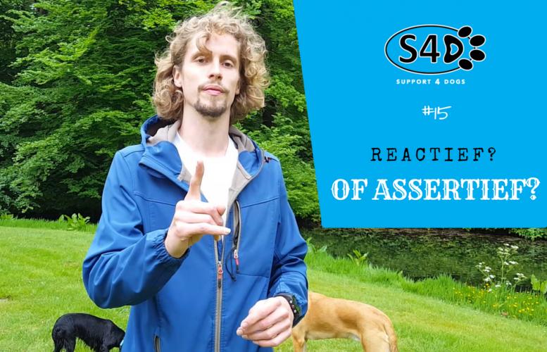 Ben jij reactief of assertief naar je hond toe?