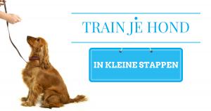 train je hond in kleine stappen