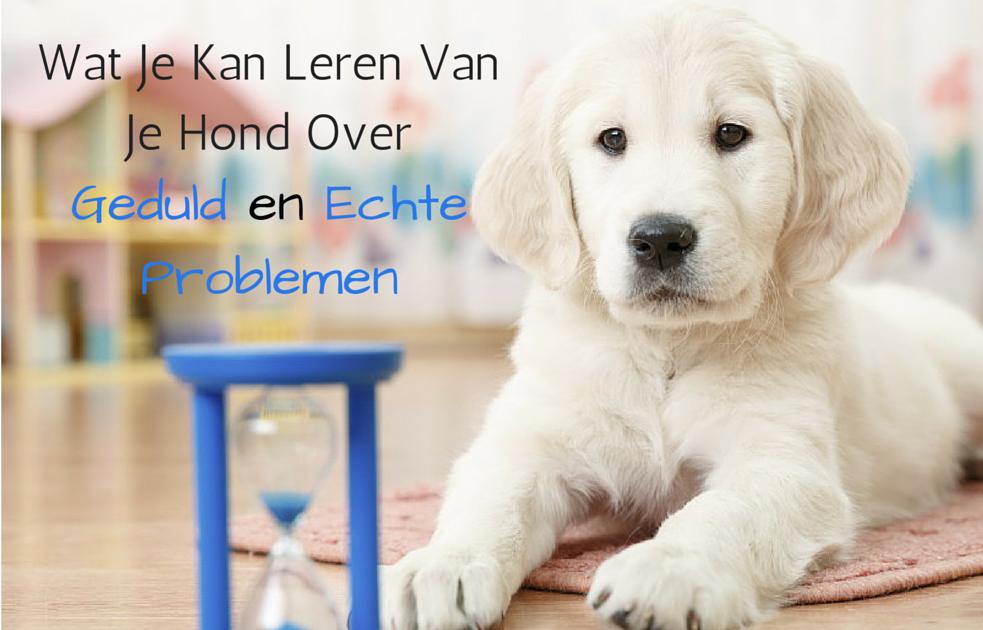 Wat je kan leren van je hond over geduld en echte problemen