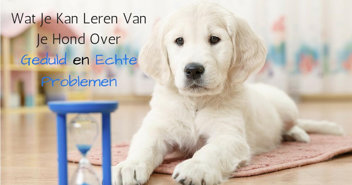 leren van je hond over geduld en echte problemen