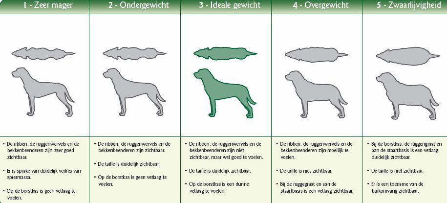 overgewicht hond 3